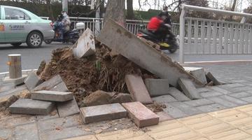 郑州男子驾驶面包车撞倒大树