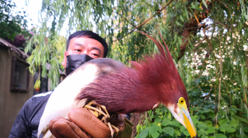 郑州野生动物救护站放归一批动物