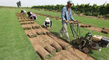 新乡:种草生金 助力脱贫