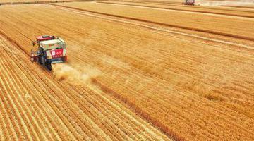 中原8550多万亩小麦唱响丰收之歌