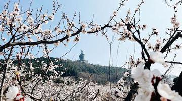 """永城:""""旅游+农业""""助力乡村振兴"""
