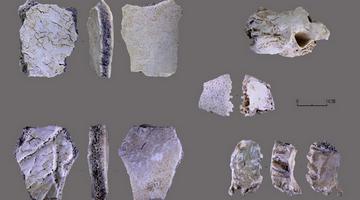 河南发现距今3万多年人类头骨化石