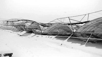4日上午,驻马店余冢村一个占地6000多平方米的联动智能温棚,不堪厚雪重压,突然整体坍塌。当天,驻马店积雪深度多在20厘米以上。 首席记者李钊摄影