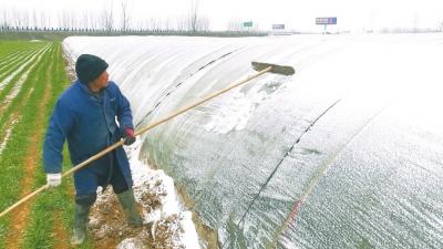 菜农自制工具除积雪