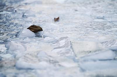 郑州一处喷泉水池内结了厚厚的冰
