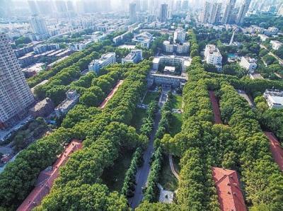 郁郁葱葱的法桐已成为绿城郑州标志