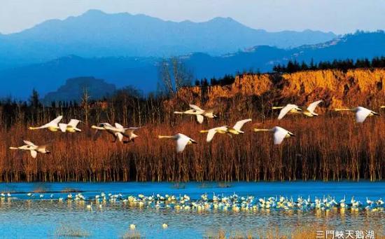 欢乐亲子游学之旅――三门峡天鹅湖湿地公园