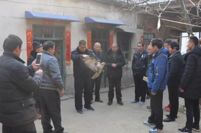"""漯河村民田地捡""""老鹰"""" 竟是国家二级保护动物"""
