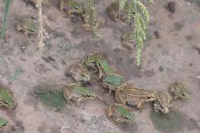 南阳驻马店出现大量青蛙蚯蚓要地震? 官方这样回应