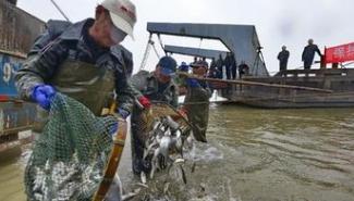 黄河流域实行禁渔期制度 洛河在列