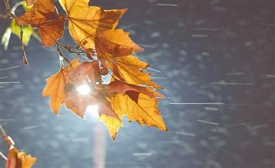 今冬首场雪花那个飘!郑州启动清除冰雪蓝色预警