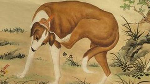 狗年说狗:开天盘古是犬神?