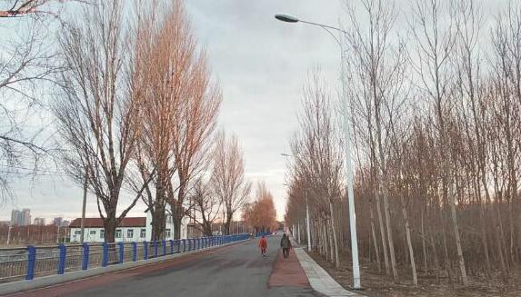 哈市市民反映太阳岛7号门附近近20盏路灯1个多月不亮