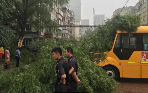哈市香坊区一棵大树树干折断砸中校车 无人员伤亡