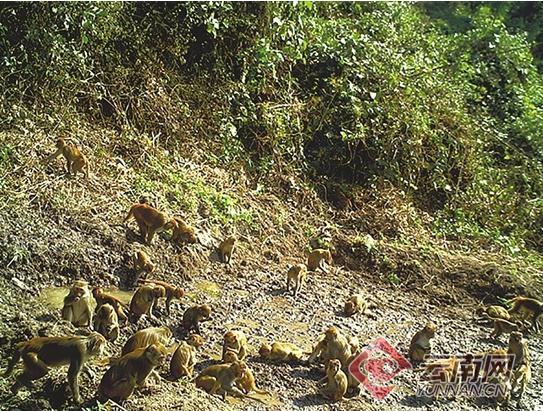"""西双版纳""""魔力""""池塘:大象野猪猕猴和谐大聚会"""