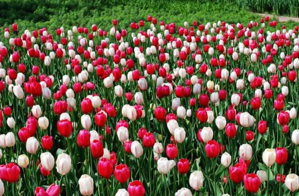 名贵花卉展下月等你来赏 植物园开展期间票价20元