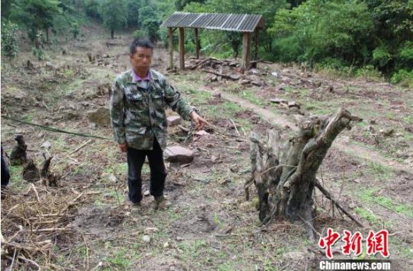 茶价上涨 男子在自然保护区毁林百亩种茶被刑拘