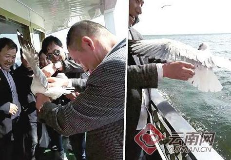 又见虐鸥事件 大理一游客洱海抓海鸥被曝光遭处罚
