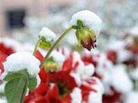 下周黑龙江全省开启速冻模式 有较大降雪过程