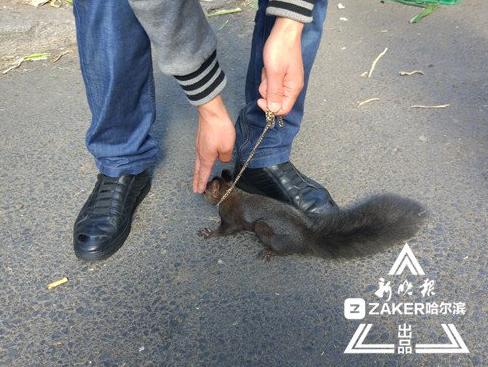 哈尔滨一男子牵松鼠上街买秋菜 招来路人围观拍照