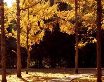 黑龙江省森林植物园22日闭园 预计明年4月下旬开放