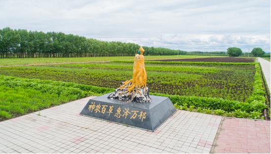 绿色宝库自然馈赠 寒地龙药产业兴城