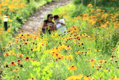 哈尔滨松花江边有条花海路 市民驻足观赏拍照