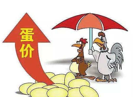 每斤突破5元哈尔滨蛋价创新高 预计中秋节后价格回落