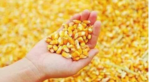 牡丹江启动2018年度玉米和大豆生产者补贴资金发放工作