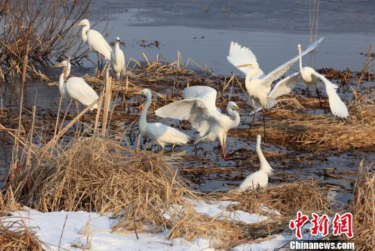 每天大批候鸟飞至保护区 吕忠信 摄