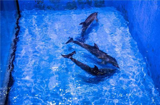 克服超大温差 刷新世界纪录:哈极地公园又来三只海豚