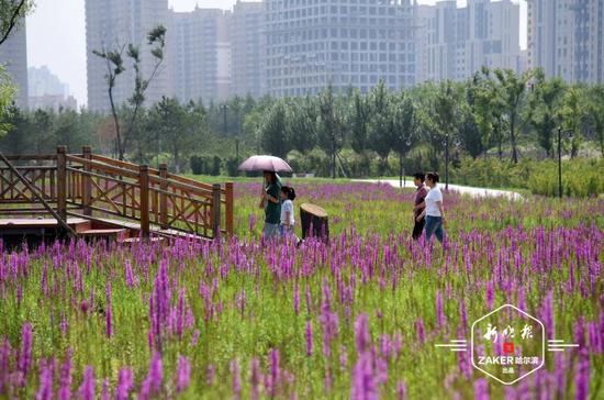 丁香公园水域内新栽植睡莲、荷花近千株。