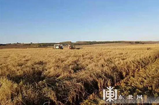 通河县兆林农民水稻专业合作社