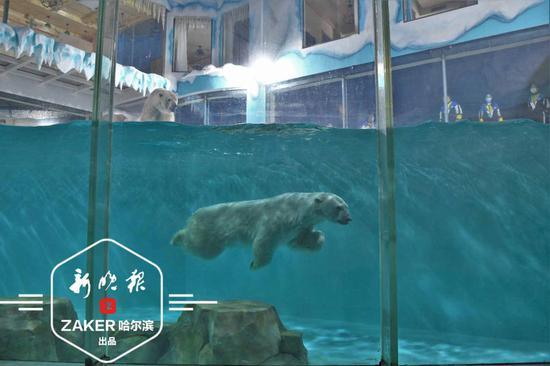 哈尔滨极地公园盛大启幕 全球首个北极熊酒店同步营业