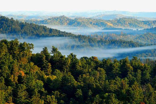 近20年来最优!龙江植被生态质量持续转好