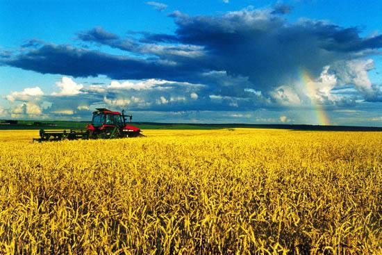 哈市加快推进秋收生产进度 收获总面积已达1178.7万亩