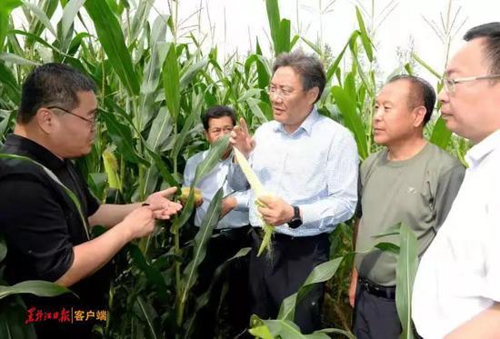 王文涛在青冈走进田间地头,查看农田过水受害情况。