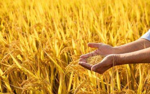 多家龙江企业上榜第六批农业产业化国家重点龙头企业