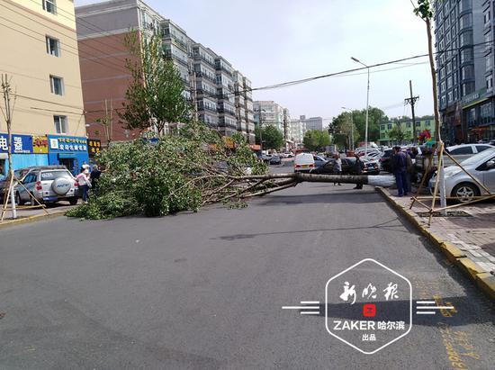 """事发现场,倒下大树的树冠把被砸汽车 """" 埋 """" 在了里面。市民供片"""