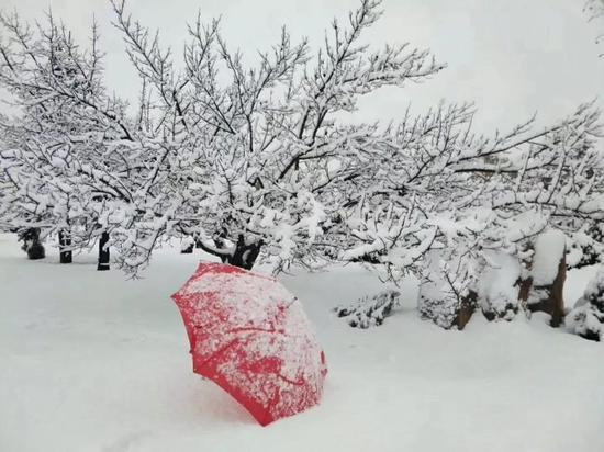 雪白和艳红总是那么相称,又要骗我去买红伞