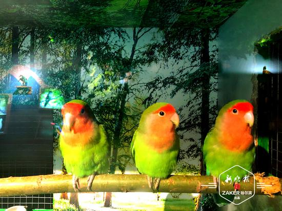 """原来不同的鸟叫声意义也不同 省博教你""""听鸟语"""""""