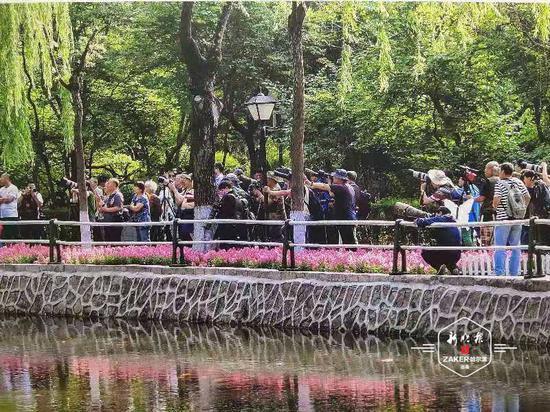 25年間 兆麟公園鏡頭下的6只鴛鴦已繁衍成200多只