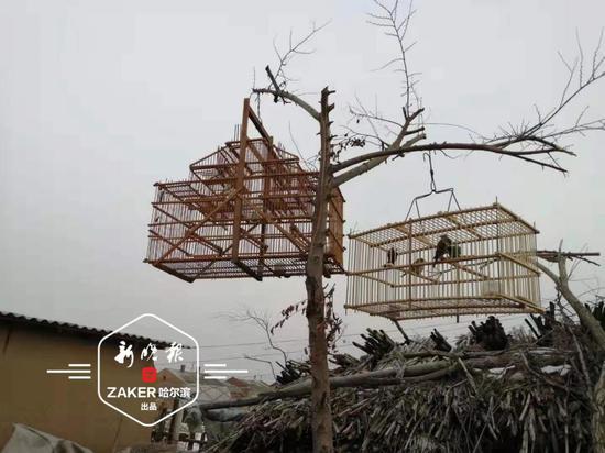 冰城志愿者巡护一天拆了32片捕鸟网!救下241只野生鸟