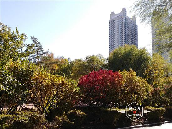 在家门口赏秋天童话 20个城市公园打卡冰城最美秋色