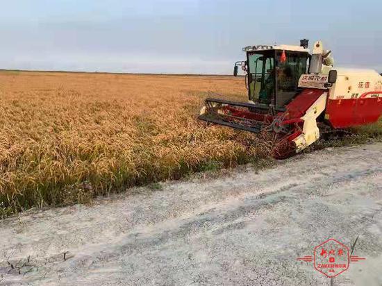 落户龙江!国家耐盐碱水稻技术创新中心东北分中心获批建设