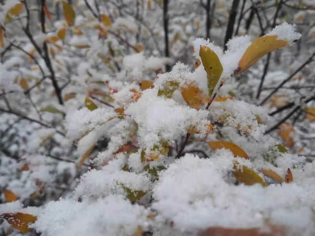 漠河下雪了!五花山色 + 鹅毛大雪 = 绝美