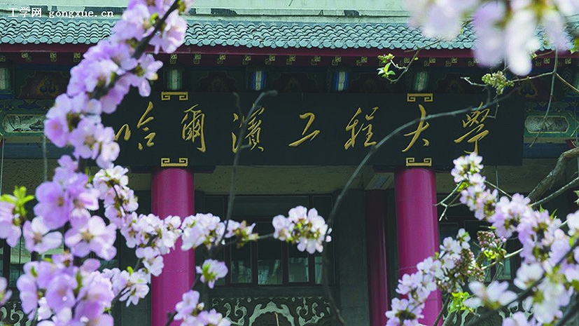 杏花美景(哈尔滨工程大学提供)