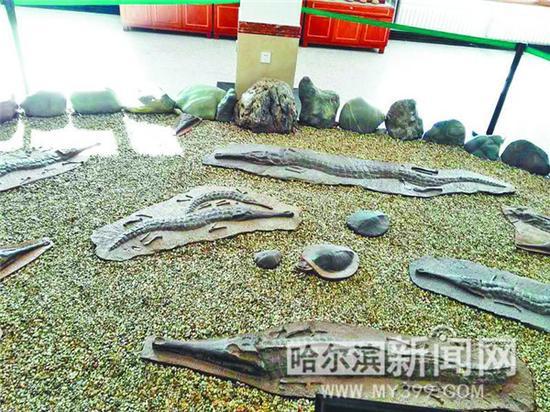 收藏馆内的化石。