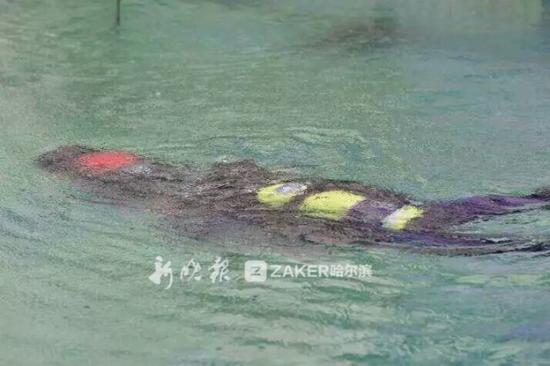 由于这款推进器体积小巧、使用便捷,很多潜水俱乐部要与李晗生合作。