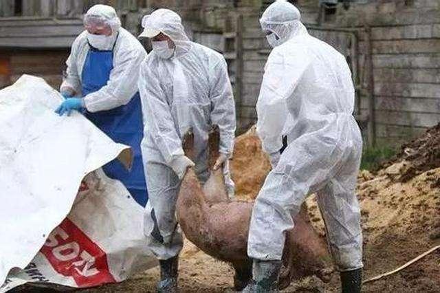 农业农村部:江苏省泗阳县发生非洲猪瘟疫情 死亡1369头